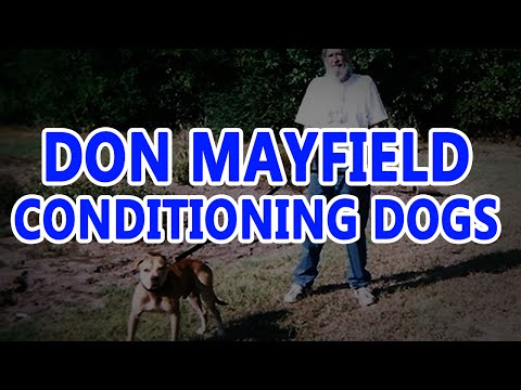 Don Mayfield Conditioning Dogs  Pit bull Legend