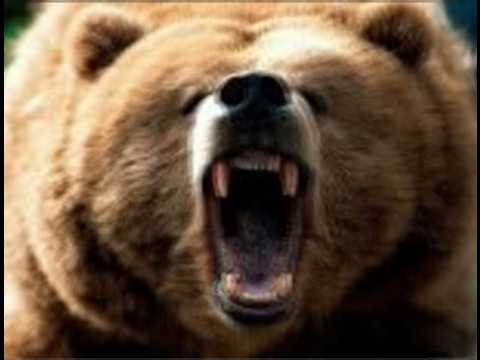 Медведь и зайцы - СКАЗКА С КАРТИНКАМИ