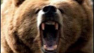 Политическая сказка про Медведя