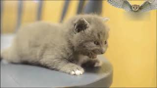 Cutest Baby in the world ♥ Top Kittens and Best Of Cute Kittens Video