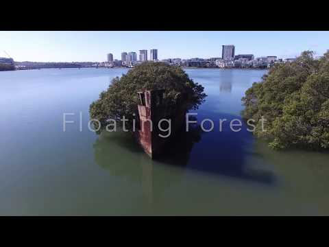 Floating Forest - SS Ayrfield Shipwreck