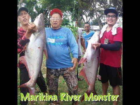 MARIKINA RIVER MONSTER!