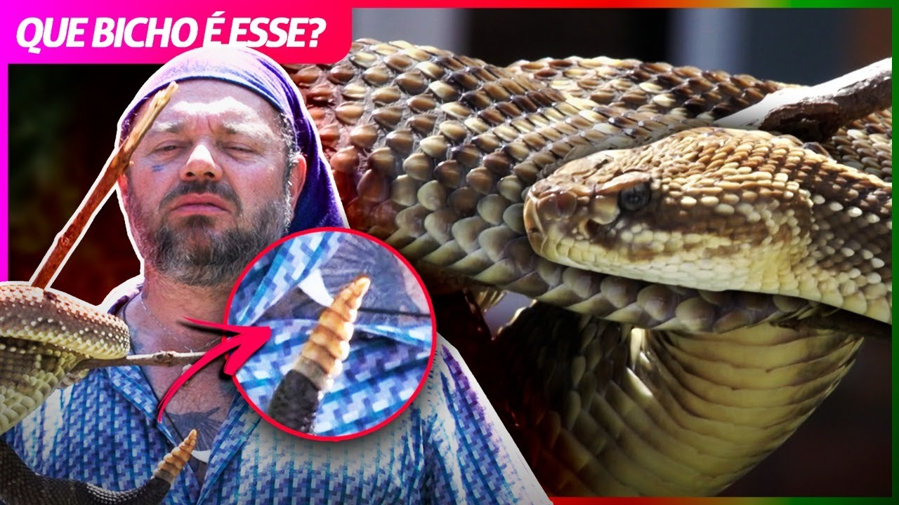 A TEMIDA CASCAVEL! | RICHARD RASMUSSEN