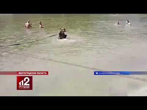 Медведь на пляже | купаться не опасно:)