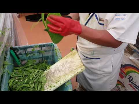 how to cook cactus leaves