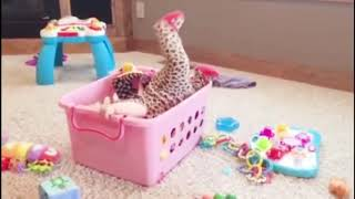 Fun and Fails Videos 😛 😜 😝 Funny Babies Stuck in Crazy Things 👉🏽 Funny Baby Video🧸