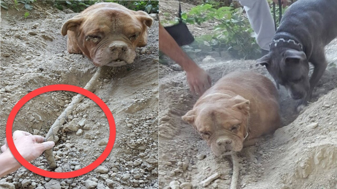 dog found buried alive defies her abuser by living an awesome life