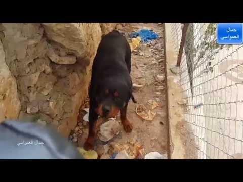 صور وانواع واسعار كلاب للبيع موقع بيع الكلاب كلاب بوليسية صغيرة كلاب ...