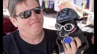 Dog Helmets Set Of Useful Picture Ideas | Dog Helmets Dogs