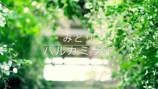 ハルカミライ - みどり