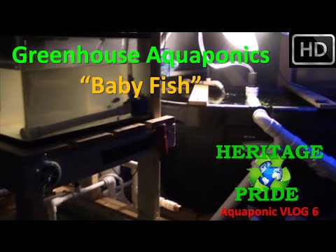 "Urban Aquaponics - ""Lost Fish!"" VLOG 6 by HPFirearms"