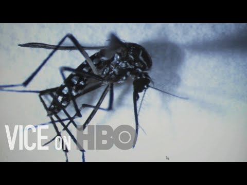 How The World's Deadliest Pandemics Are Born: VICE on HBO, Full Episode