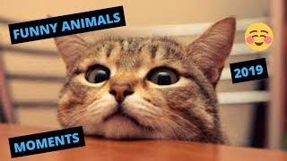 FUNNY ANIMAL VIDEOS 2019 - FUNNY ANIMAL REACTIONS