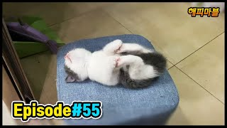 [2020]배꼽 빠지게 웃긴 고양이와 강아지 & 기타 영상모음 #55 Dogs and Cat Funny Moments | Funny Animals Compilation #55
