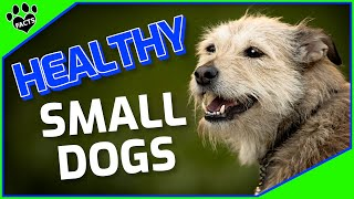 Healthiest Small Dog Breeds