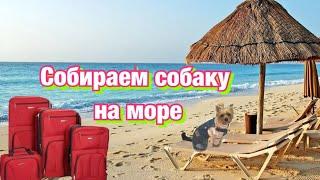 Собираем собаку на морев отпуск с собакойсобираем йорка в ИталиюЧто я беру для йорка в отпуск