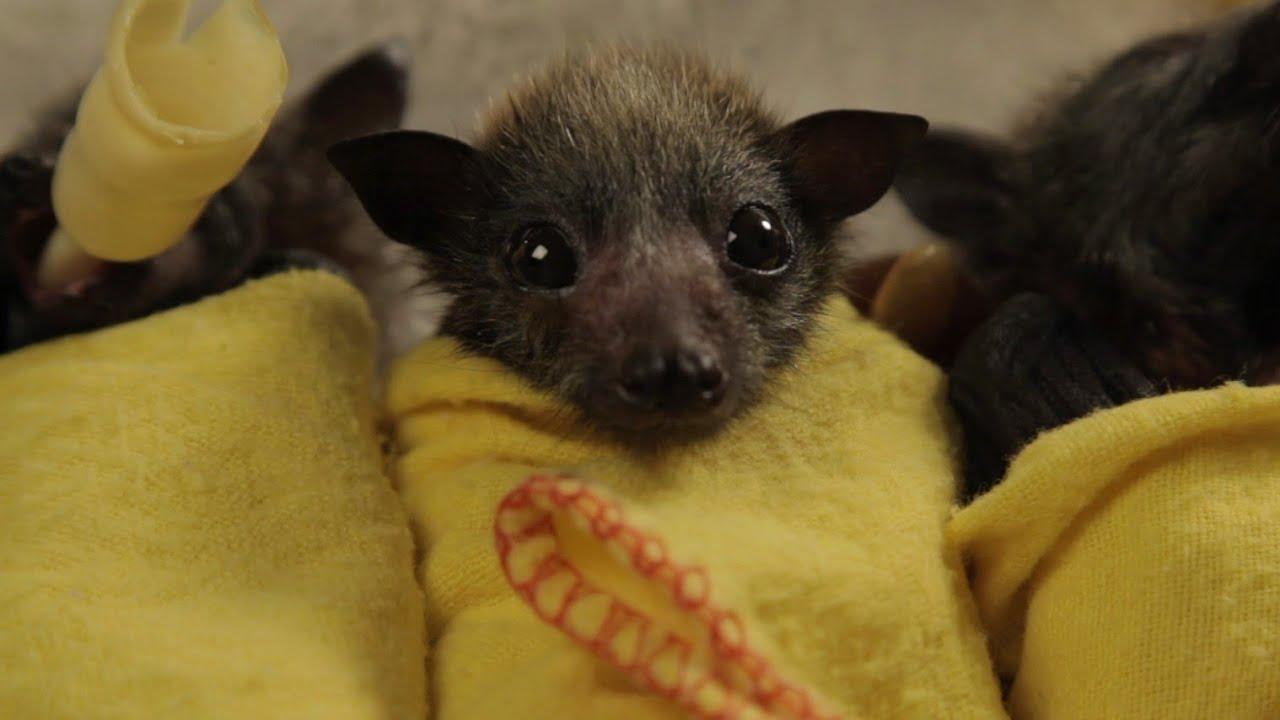 baby bat burritos youtube