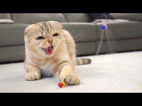 무서운 집착 고양이들Scary Obsessive Cats【수리노을 SURI&NOEL】