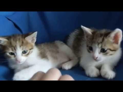 Котики в добрые руки ) Черновцы.