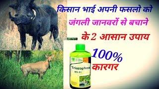 Nilgay ko kaise bhagaye|| जंगली जानवरों को खेत से भगाने के 2आसान और सस्ते उपाय