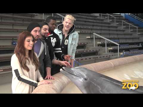 Pentatonix Visits Brookfield Zoo
