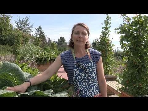 When and How to Harvest Vegetables – In the Alaska Garden with Heidi Rader