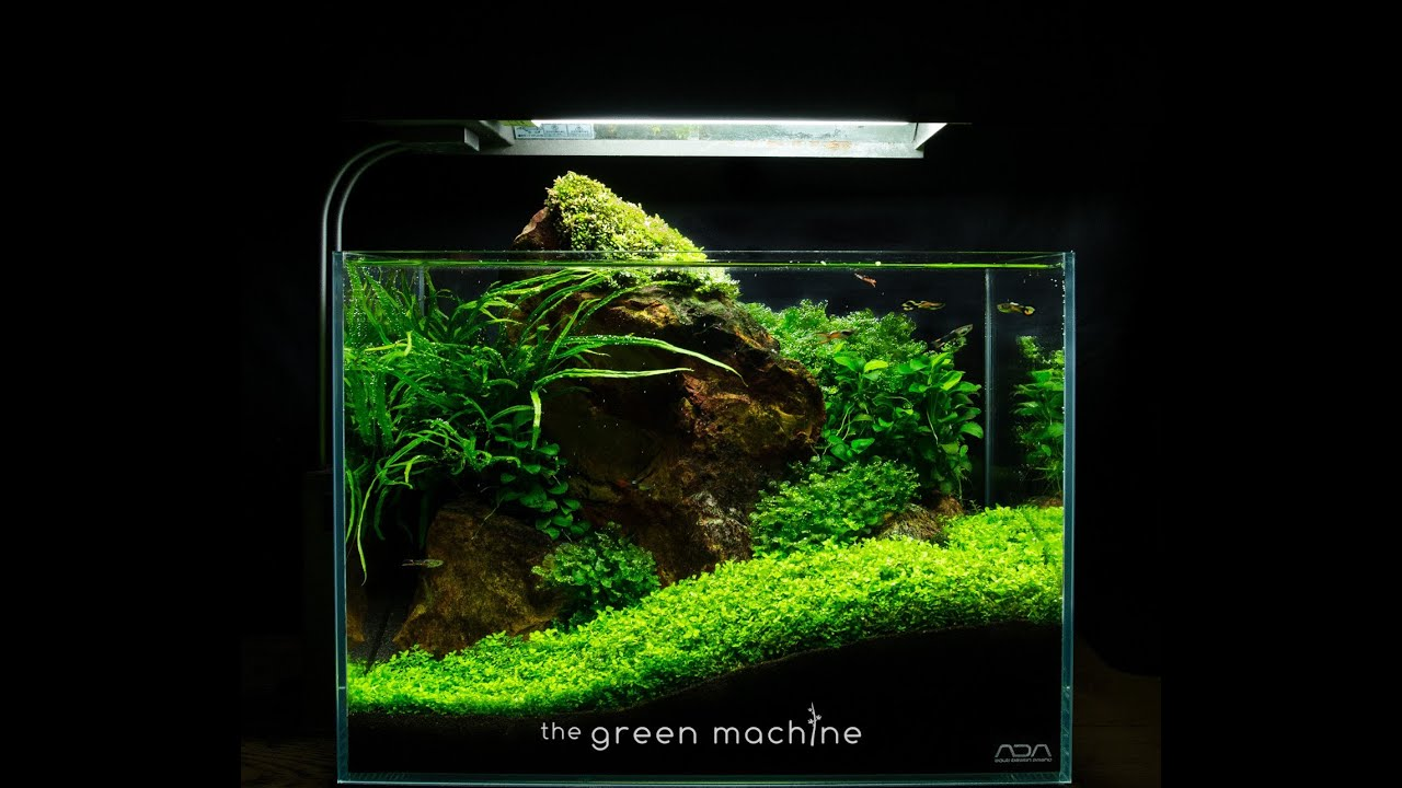 Red Rock Nano Aquascape by James Findley - YouTube