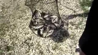 Рыбалка в Подмосковье на Озере Н�(Отчеты о рыбалке на http://Sadok.ru - о рыбалке и рыбаках, отчеты, новости с водоемов., 2011-05-26T16:00:40.000Z)