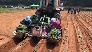 고구마,고구마이식기,고구마순정식기 병열산업
