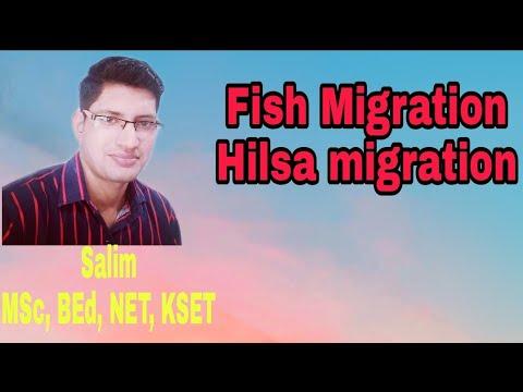 Fish Migration (Part-1)# Hilsa Migration# Anadromous Migration