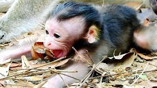 Newborn Baby Monkey That Parents Abandoned - She Take Her Newborn Baby Monkey Alone