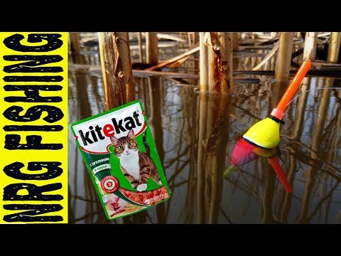 I catch carp at the Kitekat!!! | who would have thought!?!?