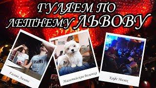 Летний Львов, купили собаку, жесть в кафе Мазох, Криївка, Лычаковское кладбище, Гасова Лямпа Львов