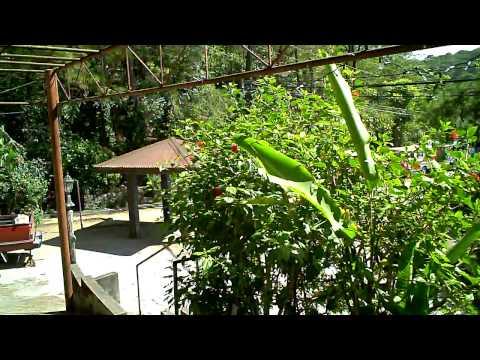 Baguio View