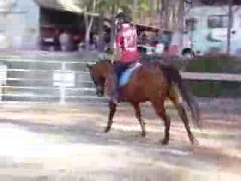 Sugar, 2004 AQHA 15 hand mare FOR SALE