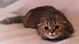 Cute Kotów Czuje Się Winny - Kompilacja Śmieszne Winnego Kota