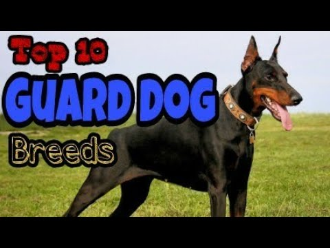 "Top 10 Guard Dog Breeds. ,,. Must watch ,,,  by lovely pets "" Facts about Dogs """