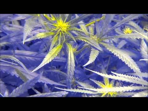 2013 HIGH TIMES CANNABIS CUP Race To 420 Special Edition Full