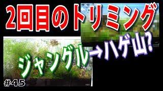 【第2回トリミング大会!】出来上がったのはハゲ山か?それとも?【水草水槽・熱帯魚(Planted aquarium)】#45