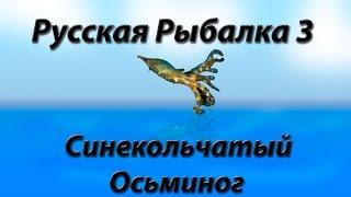 Русская Рыбалка 3 Синекольчатый Осьминог
