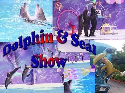 Dubai Dolphinarium, Dolphin  and Seal show, Full Show