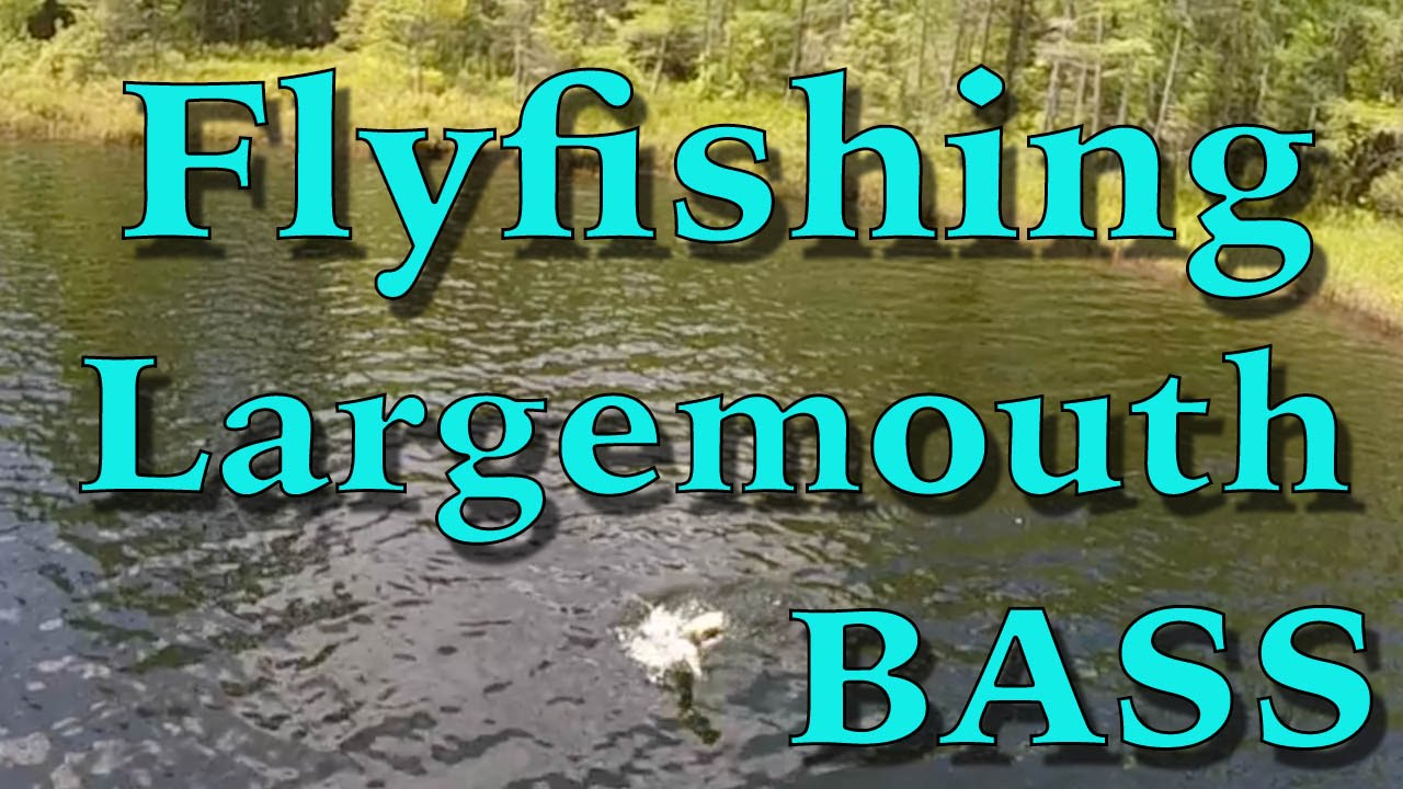 Bass fly fishing gear