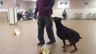 Argos Dog Training Boston advanced group class.