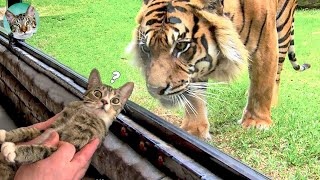 Pets Getting Scared Over Nothing Funny Cat And Dog Videos #3  Amazing Animals