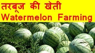 तरबूज की खेती  Watermelon farming business - Tarbooj Ki Kheti Kaise Kare