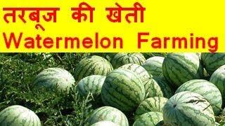 तरबूज की खेती  Watermelon farming business - Tarbooj Ki Kheti Kaise Kare