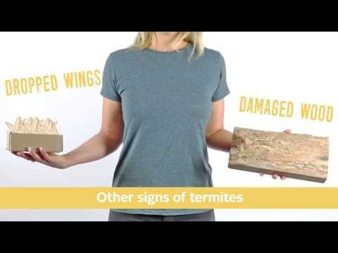 How to Tell The Difference Between a Termite and Flying Ant