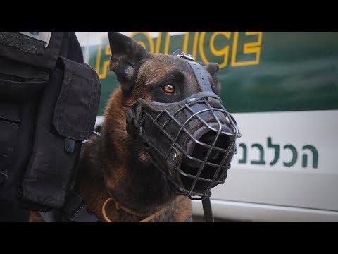 כלבים וסוסים בשירות משטרת ישראל