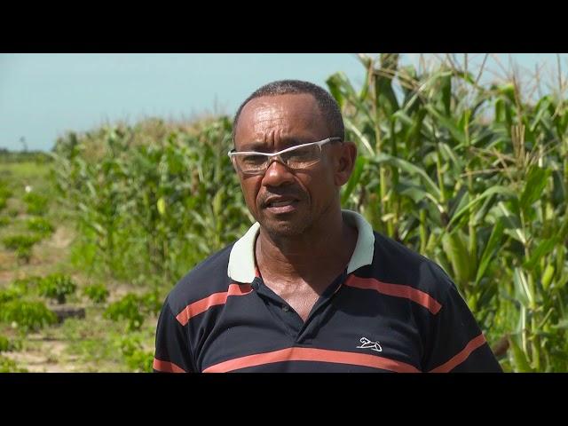 Agricultura familiar - Ronilson