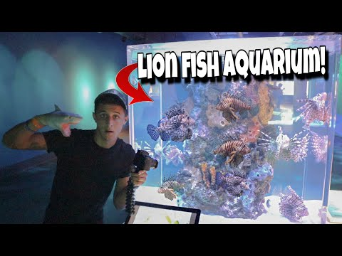INVASIVE Lion Fish BREEDING Aquarium!!